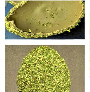 Uovo di pasqua al pistacchio
